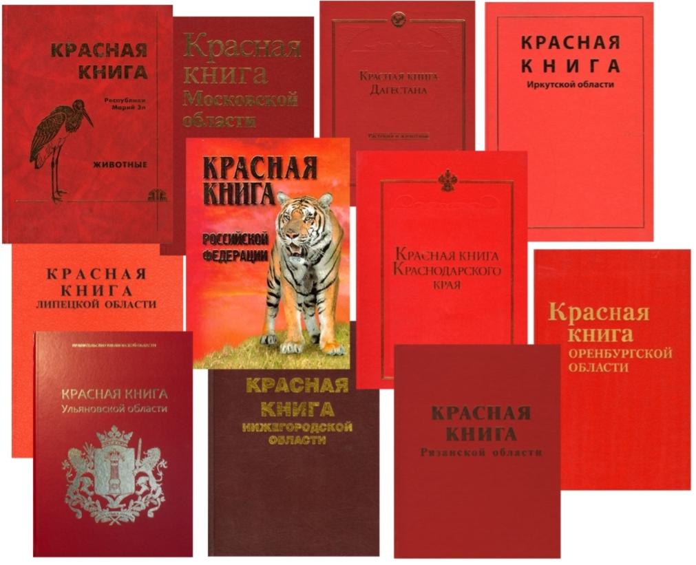 Какая утка занесена в красную книгу